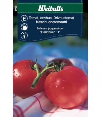 Tomat, drivhus - Harzfeuer F1