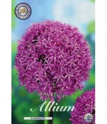 Allium, Globemaster