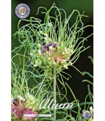 Allium, Sandlök - Hair