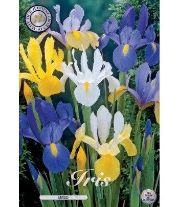 "Iris ""Hollandica Mix"""