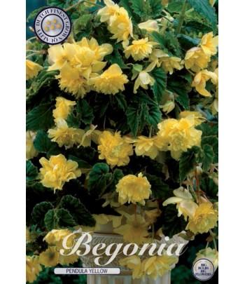 Hängbegonia - Pendula Yellow