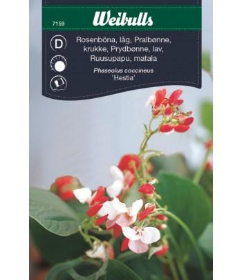 Rosenböna, låg - Hestia