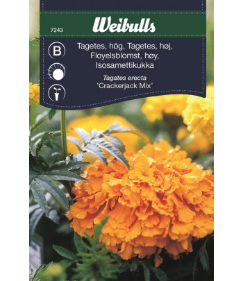 Tagetes hög - Crackerjack mix