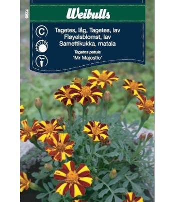 Tagetes - Mr majestic