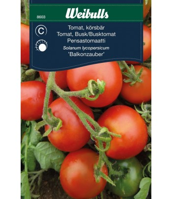 Tomat - körsbärs, Balkonzauber