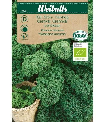 Kål, grön- Westland autumn,...