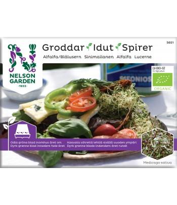 Groddar, Alfalfa, Organic