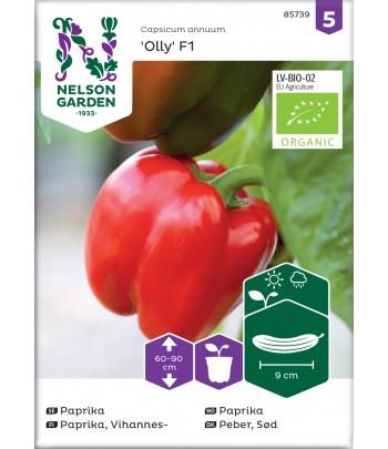Paprika, Olly F1, Organic