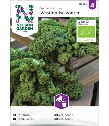 Kål, Grön- 'Westlandse Winter'