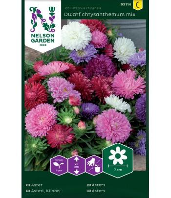 Aster - Dwarf chrysanthemum...