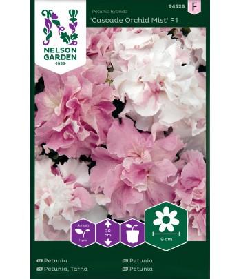 Petunia, Cascade Orchid...