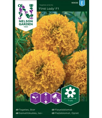 Tagetes, Stor-, First Lady F1