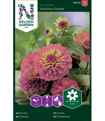 Zinnia, Sunbow Purple