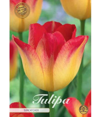 Tulpan, triumf -  Suncatcher