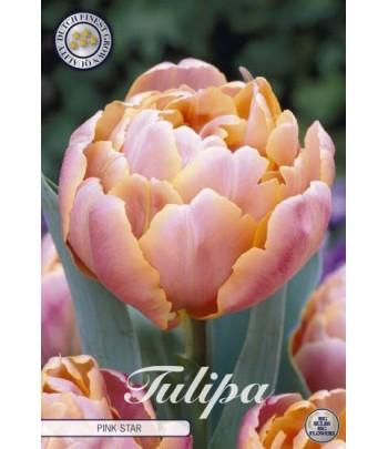 Tulpan, dubbel - Pink star