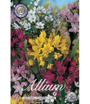 Allium, Småblommig - Storpack