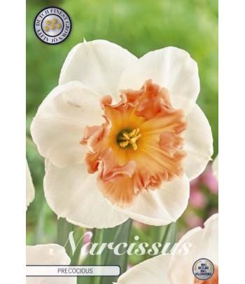 Narciss - Precocious