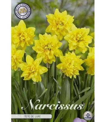 Narciss - Tête à Tête de Luxe