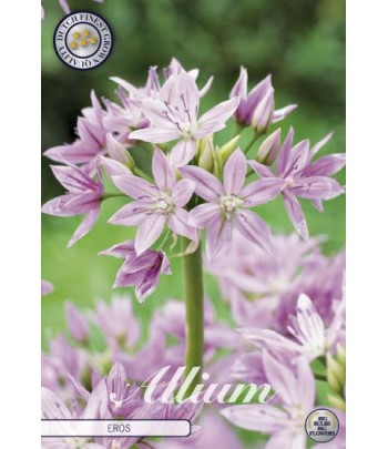 Allium - Eros