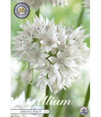 Allium - Gracefull Beauty