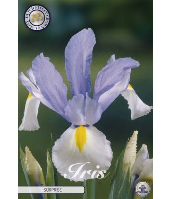 Holländsk iris - Suprise