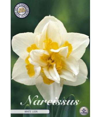 Narciss - White Lion