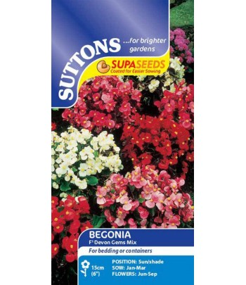 Begonia, F1 Devon Gems Mix