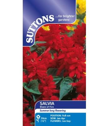Salvia, Blaze of Fire