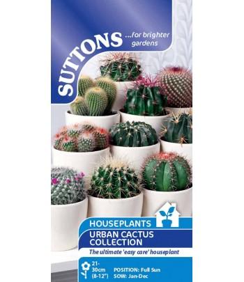Kaktus - Urban Cactus...