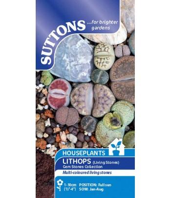 Levande stenar - Lithops