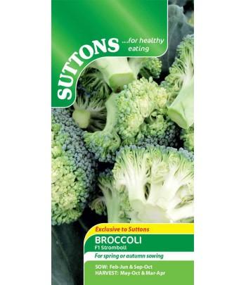 Broccoli - F1 Stromboli