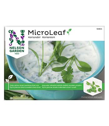 Micro Leaf, Koriander