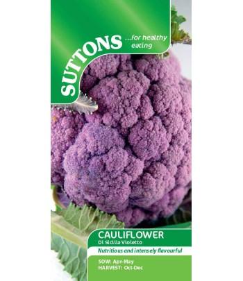Blomkål Di Sicilia Violetto