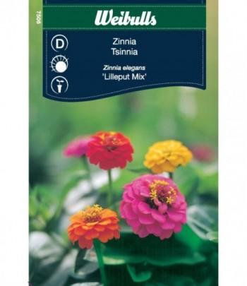 Zinnia - Lilleput mix