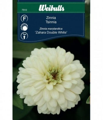 Zinnia - Zahara Double White