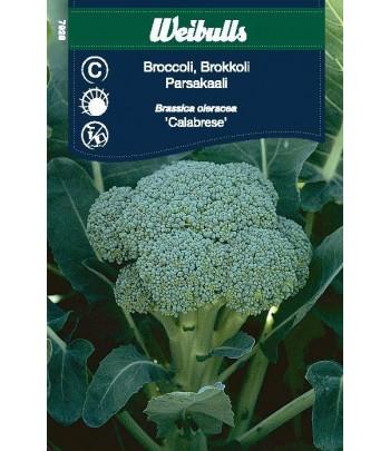 Kål, Broccoli - Calabrais