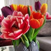 Någon mer som blickar mot våren vid åsynen av krispiga tulpaner? 🌷 Glöm inte tulpanens dag imorgon💐 _________________________________________________ #tulpaner #tulpan #tulpanensdag #tulpanensdag15maj #tulips #tulips🌷 #vårblommor #🌷 #wearegardeners #trädgårdsinspiration #trädgårdsliv #odlahemma #odlarglädje #trädgårdstips  #odla #trädgårdstider #odla2021 #iminträdgård #minträdgård #tradgard #trädgårdar #trädgården #trädgårdaamatörerna #trädgårdsarbete #trädgårdsdrömmar #trädgårdsglädje #trädgårdsinspo #tradgardsinspo #trädgårdslycka #trädgårdsmästare