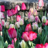 Inte har ni väl missat?!  En så här varm höst lockartill att frossa i höstlökar,så varför inte passa på till 50% rabatt 🌱👌 _______________________________________________ #rea #höstlök #höstlökar #höstsäsong #höstblommande #tulip #tulips #tulips🌷 #tulpan #tulpaner #narcisser #narcissus #lilja #lillium #pärlhyacint #krokus #crocus #snödroppe #vårblomma #vårlängtan #trädgårdslycka #trädgårdsamatörerna #trädgårdsliv #trädgård #planering #plantera #odling #odla #frömedposten #fromedposten