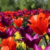 Se till att förbeställa dina höstlökar för att garanterat få din trädgård att blomstra som önskat 🌸🏵️🌷 __________________________________________________ #höstlökar #höstlök #tulpaner #tulpan #tulips #tulips🌷 #allium #krokus #crocus #narcisser #narcissus #lilja #liljor #pärlhyacint #muscari #snödroppe #fritallia #vårblommande #vårblommor #höstsäsong #blommandeträdgård #blomsterlök #planering #trädgård #trädgårdsliv #fromedposten #fromedposten