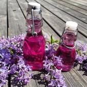 Tips i syrenernas fulla blom🌸  Recept: 3 dl syrenblommor  2dl socker 2dl vatten  10st blåbär  Gör så här: 1. Plocka av blommorna från kvisten (Det ska endast vara blomman och inte något av det gröna). Skölj dem. 2. Koka upp vatten och strösocker och låt sjuda 2-3 minuter tills allt socker smält. Dra av från plattan och låt svalna till rumsvarmt. 3. Blanda i blommor och blåbär, plasta och låt stå i kylskåp över natten (Vill du ha mer färg kan du mosa blåbären lite och röra om).  4. Sila sedan av i en finmaskig sil eller ett kaffefilter. Förvara i en ren flaska eller burk. Håller cirka en vecka i kylskåp och det går utmärkt att frysa 🙌 _________________________________________ #syrensirap #syrener #syren #syrenernastid #syrenblommor #dofter #doftandeträdgård  #sirap #recept #blommor #blomma #flower #flowers #tavarapånaturen #trädgårdslycka #trädgård #garden #gardening  #trädgårdstips #frömedposten #fromedposten
