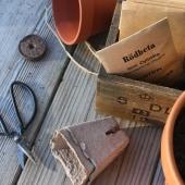 Lagerpåfyllnad - fynda dina fröer för upp till 50% rabatt🌱 _______________________________________________#fröer #frö #fro #rea #odling #odla2020 #odla #odlaätbart #minträdgård #trädgårdsliv #trädgård #egenodlat #så #sådd  #sååretrunt #höstsådd #frösådd #frömedposten #fromedposten